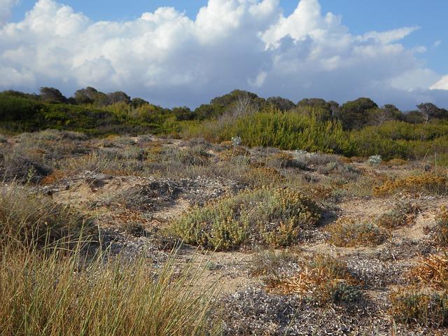dunes-381148_640