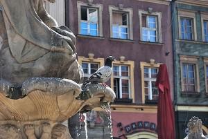 Longer weekend in Poznan